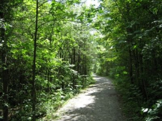 Trail Back to Car -- Well Kept Path