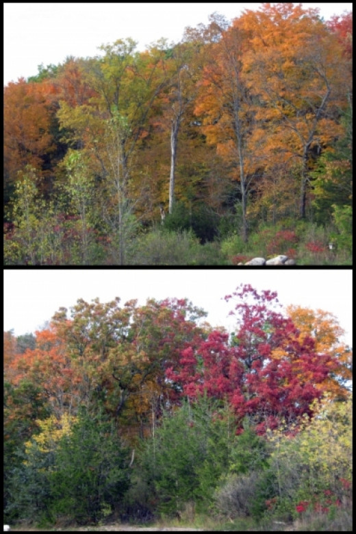 Fall Colored Trees from Parking Lot