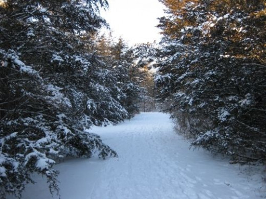 The path leading to the Bleasdel Boulder.It was partially packed down from earlier walkers and cross country skiers.