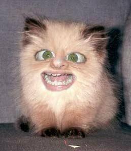Kitten ONE