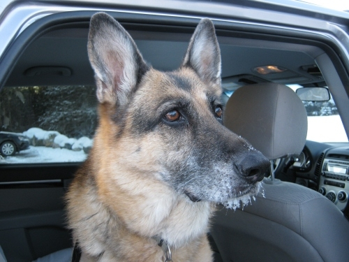 Back at vehicle. It was a cold day, -12C but only the dog ended up with an icicle beard.