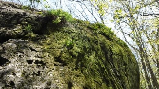 Moss on upper right side of boulder.