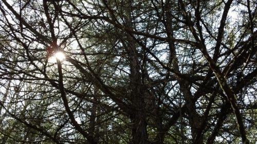 Sun through branches.