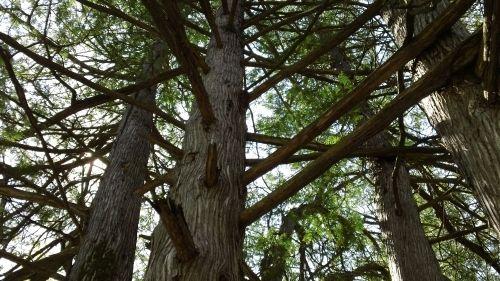 A natural tree ladder.