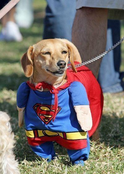 (1) Super Dog