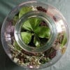 Bottle Gardens and Hanging Glass Terrariums