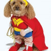 Funny Halloween Dog Costumes