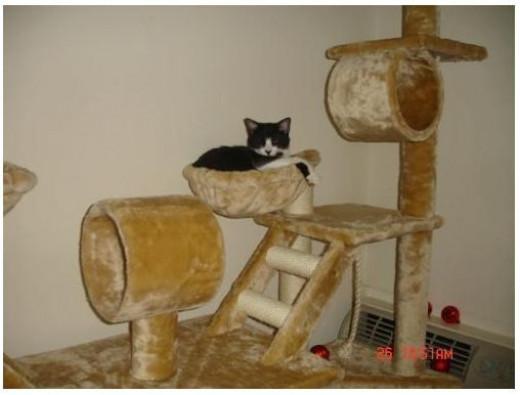 Pet Palace Cat Gym