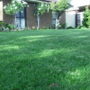 how to get rid of paspalum in lawns