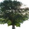 Create a Family Tree Calendar