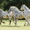 Horse breeds the top 10 most interesting horse facts best horse