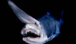 The World's Weirdest and Scariest Fish Species