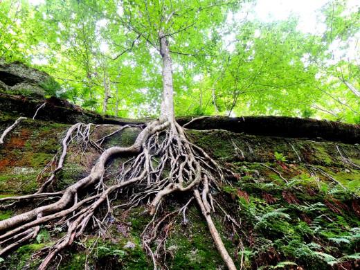 Trees are amazing!