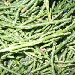 samphire healthy tasty vegetable seaweed