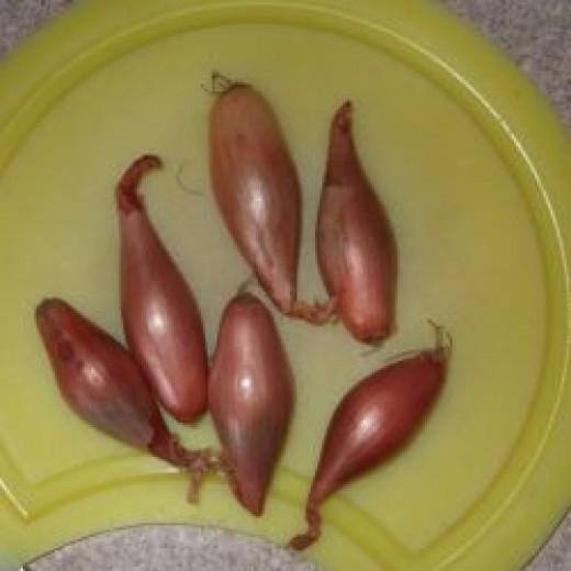 echallion shallots pickling pickled