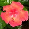 Capri Diem profile image