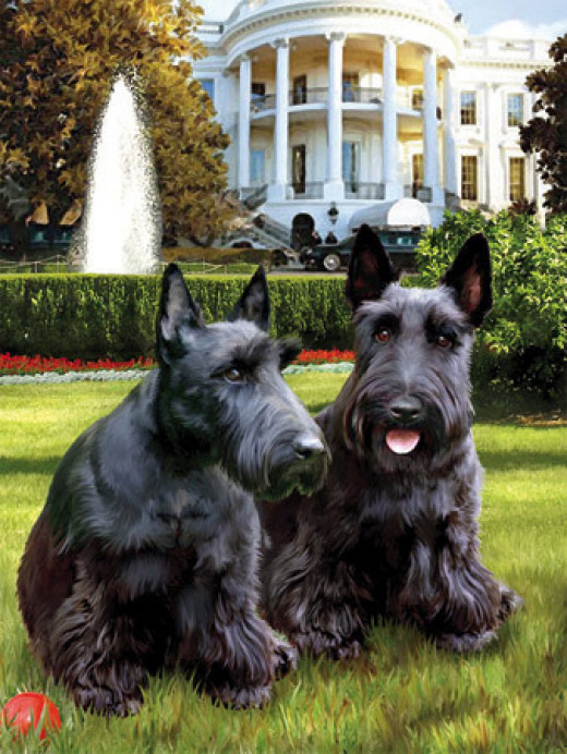 Presidential Dogs Jigsaw Puzzle