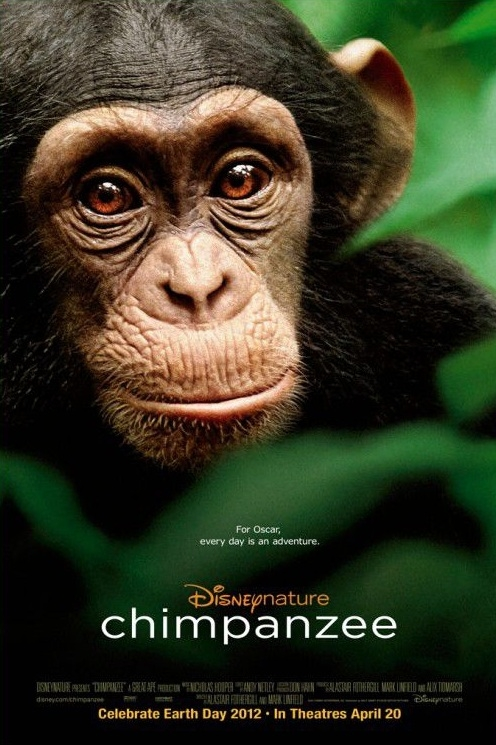 Disneynature Chimpanzee Poster