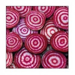 "Heirloom Beets - You Can't ""Beet"" Variety"