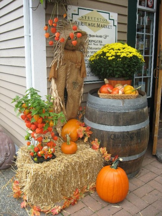 Pumpkins on display - a signature of autumn.