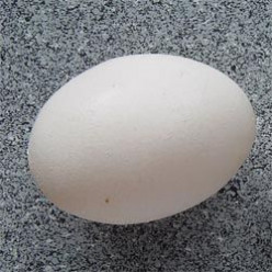 Cook an Egg: What do you need to do that?
