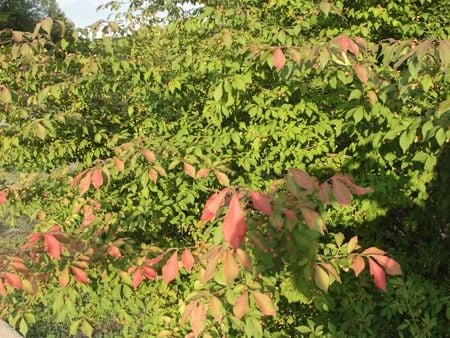 Sumac beginning to change.