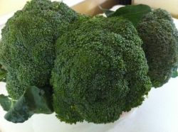 Fresh from the garden broccoli. The healthy choice.