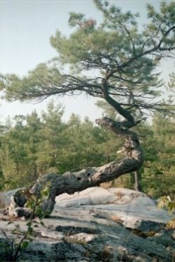 Trees and Plants Growing Out of Solid Rock-An Oddity of Nature