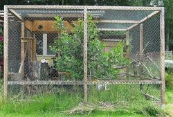 Tree cage for raccoon