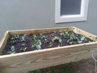 No Room to Plant. Try Raised Garden Boxes