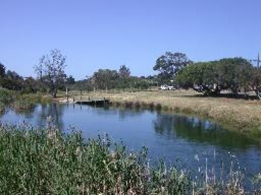 Edithvale to Frankston - Wetlands