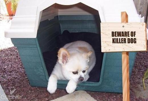 """My """"Killer"""" Guard Dog"""
