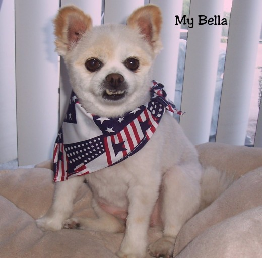 Bella ~ Ready For The 4th Of July!