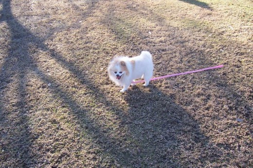 Bella Loves The Park!