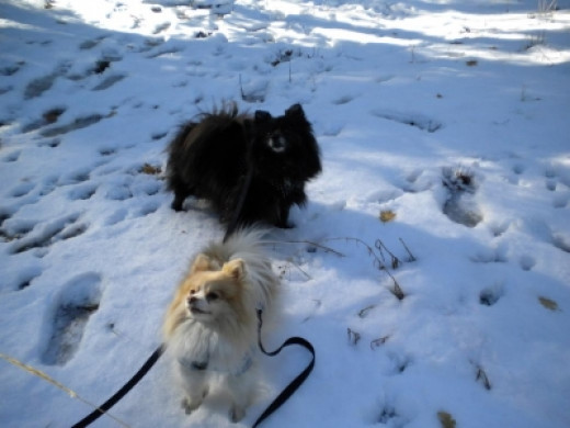 Tinker and Nanna - First Time Playing In The Snow