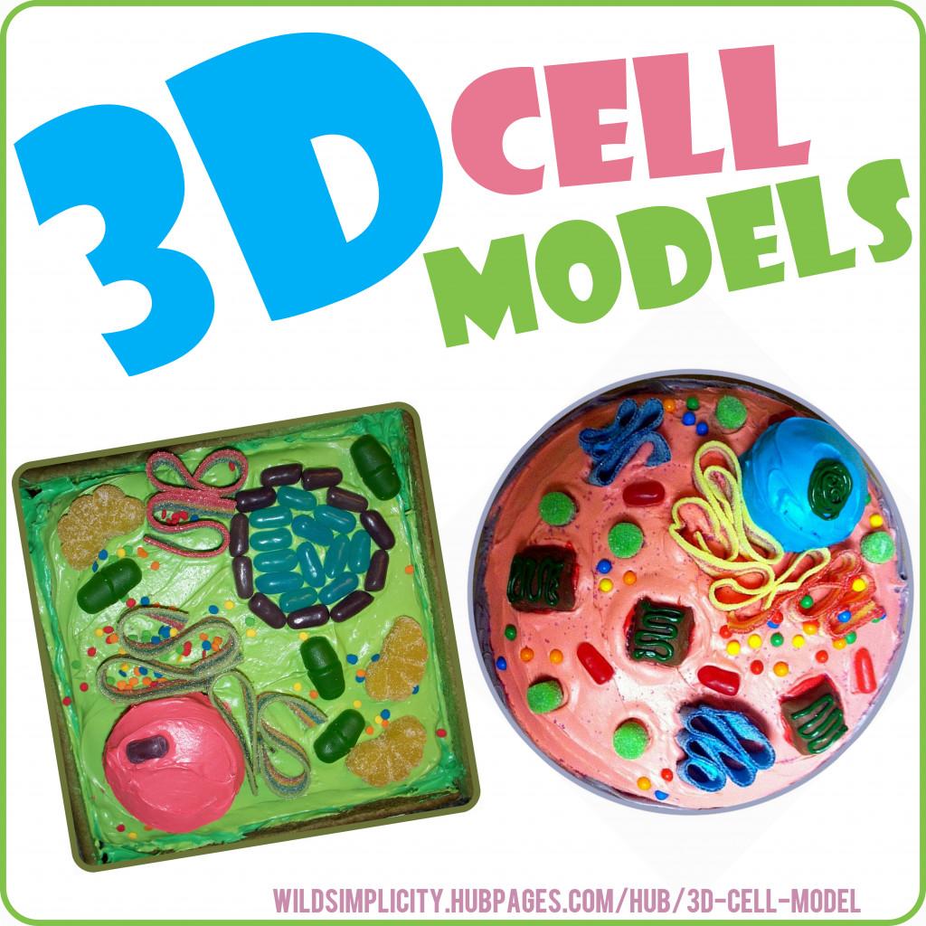 3d plant amp animal cell models