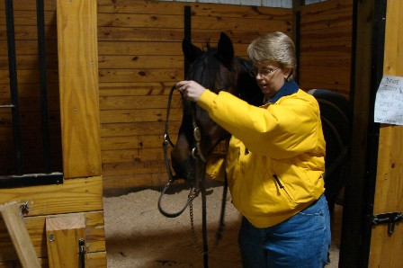 Putting on a halter on a horse the right way