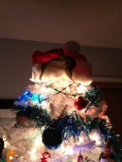 The Christmas Bat