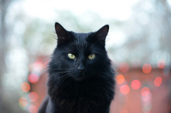 The Marvelous Mystery of Black Cats