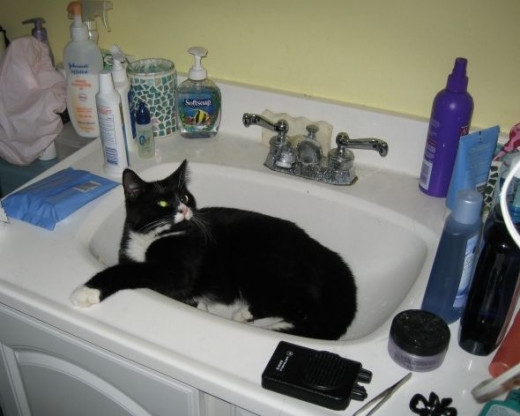 Cat Day Spa