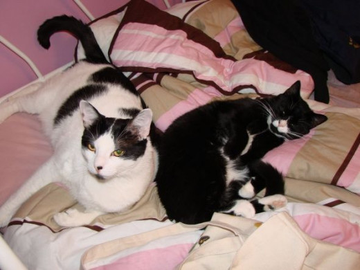 Cat Nap Time