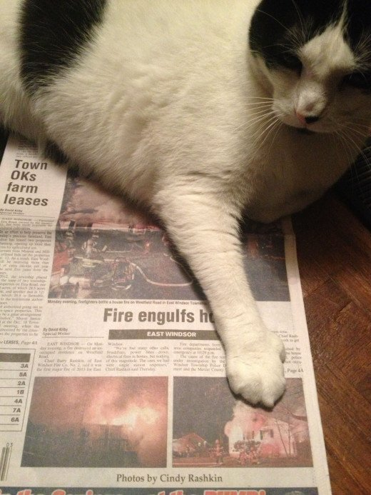 Cat size news photos of his firefighter dad