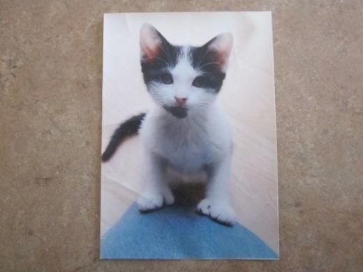 Sammy Cat Baby Photo