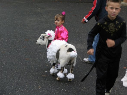 We have had all kinds of visitors to our Open House Halloween Party.  Even the family goat can dress up as a pretty cool poodle with the right Halloween costume.