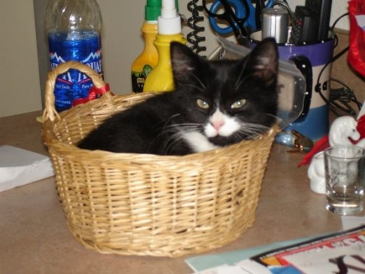 Charli Cat Baby Photo
