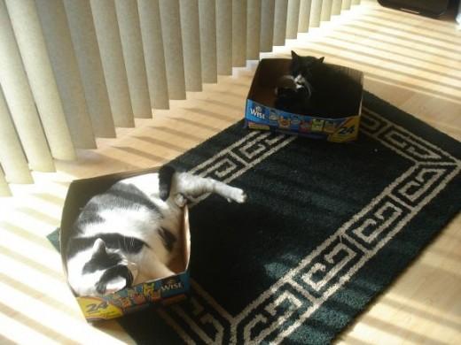 Snack Size Kitty Treats