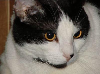 Sammy Cat Photo Close Up