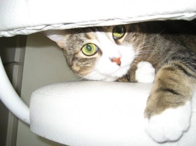 Mimi Cat's Peek A Boo Photo Shoot