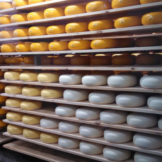 Cheese wheels at varying levels of readiness. Each wheel gets 4 coats of a plastic blend material that protects it. Dark yellow wheels have 4 coats.