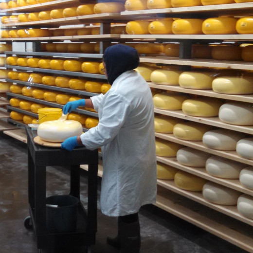 "One of the Cheese Affiniers ""paints"" the first protective coating on a wheel of cheese."